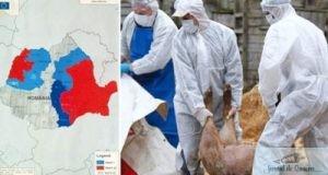 Presedintele ANSVSA: Romania si Europa se confrunta cu cea mai grava boala a animalelor de dupa al Doilea Razboi Mondial 23